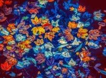 fall-leaves-3744649__340.jpg
